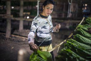 Cosedora de tabaco. Feminismo en Cuba